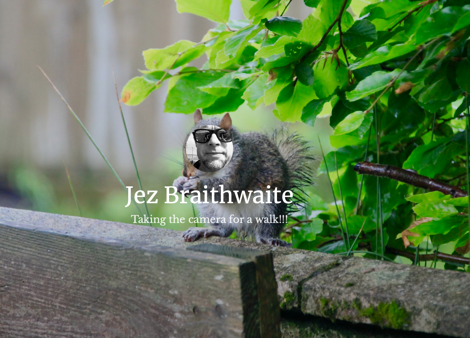 Jez the squirrel by Jez Braithwaite