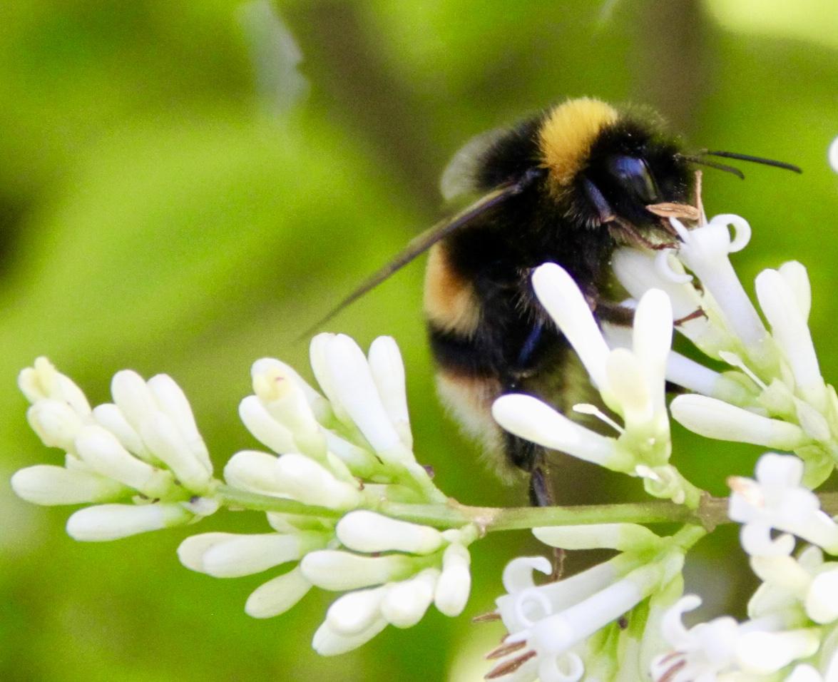 Bee by Jez Braithwaite