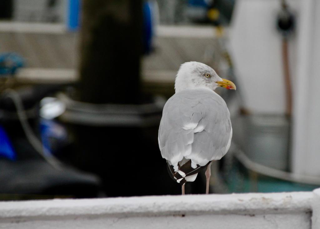 Grumpy Seagull by Jez Braithwaite