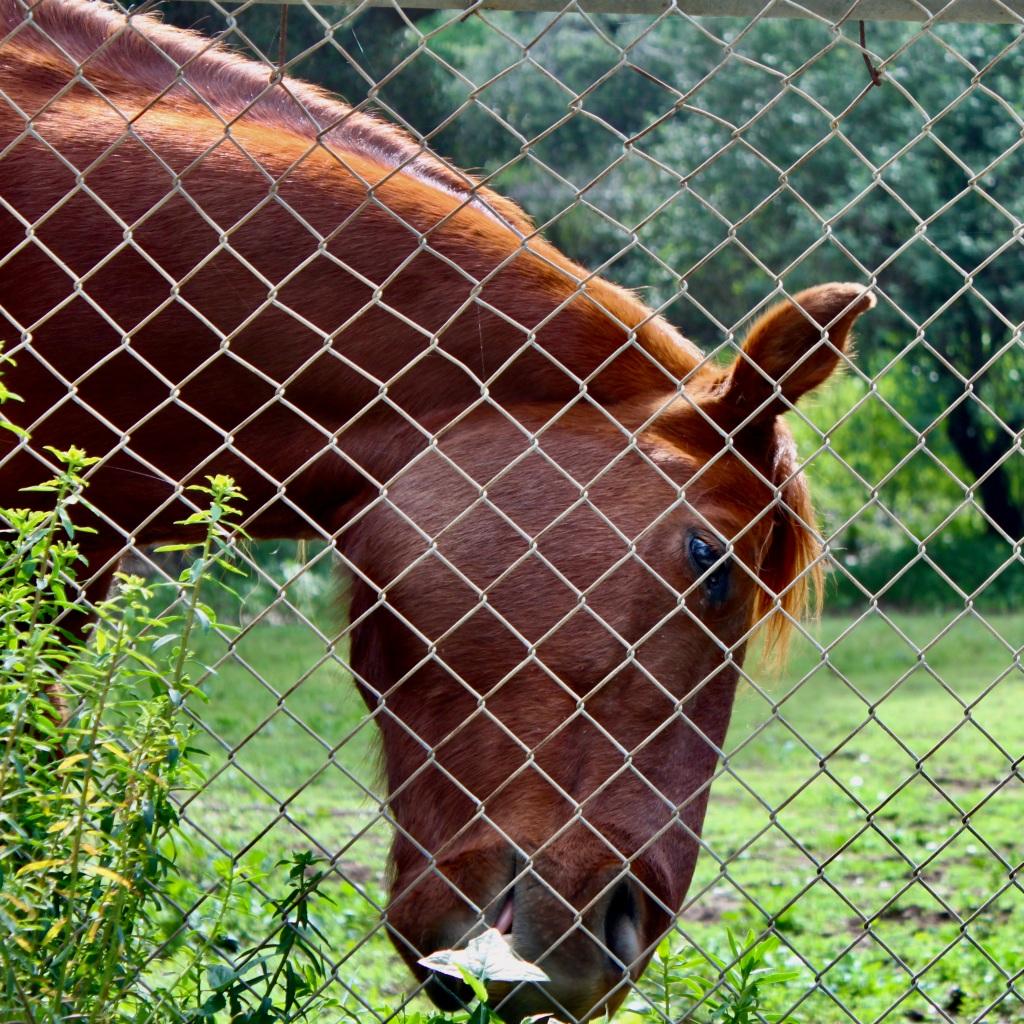 Horse by Jez Braithwaite