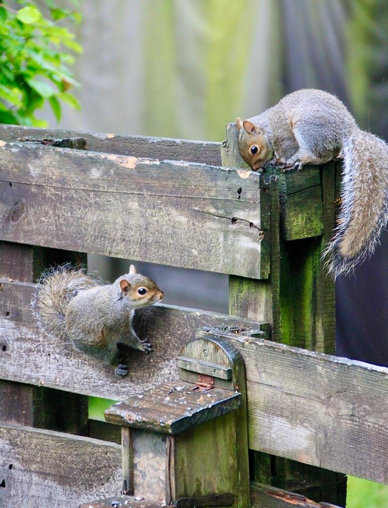 Totie wee skwurrels by Jez Braithwaite