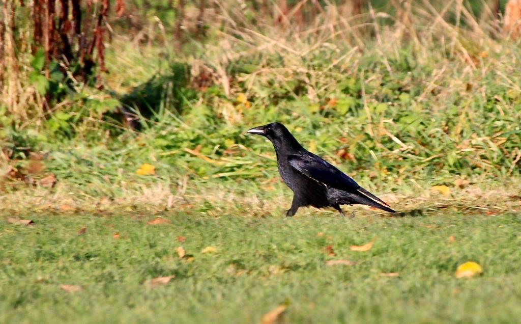 Raven by Jez Braithwaite