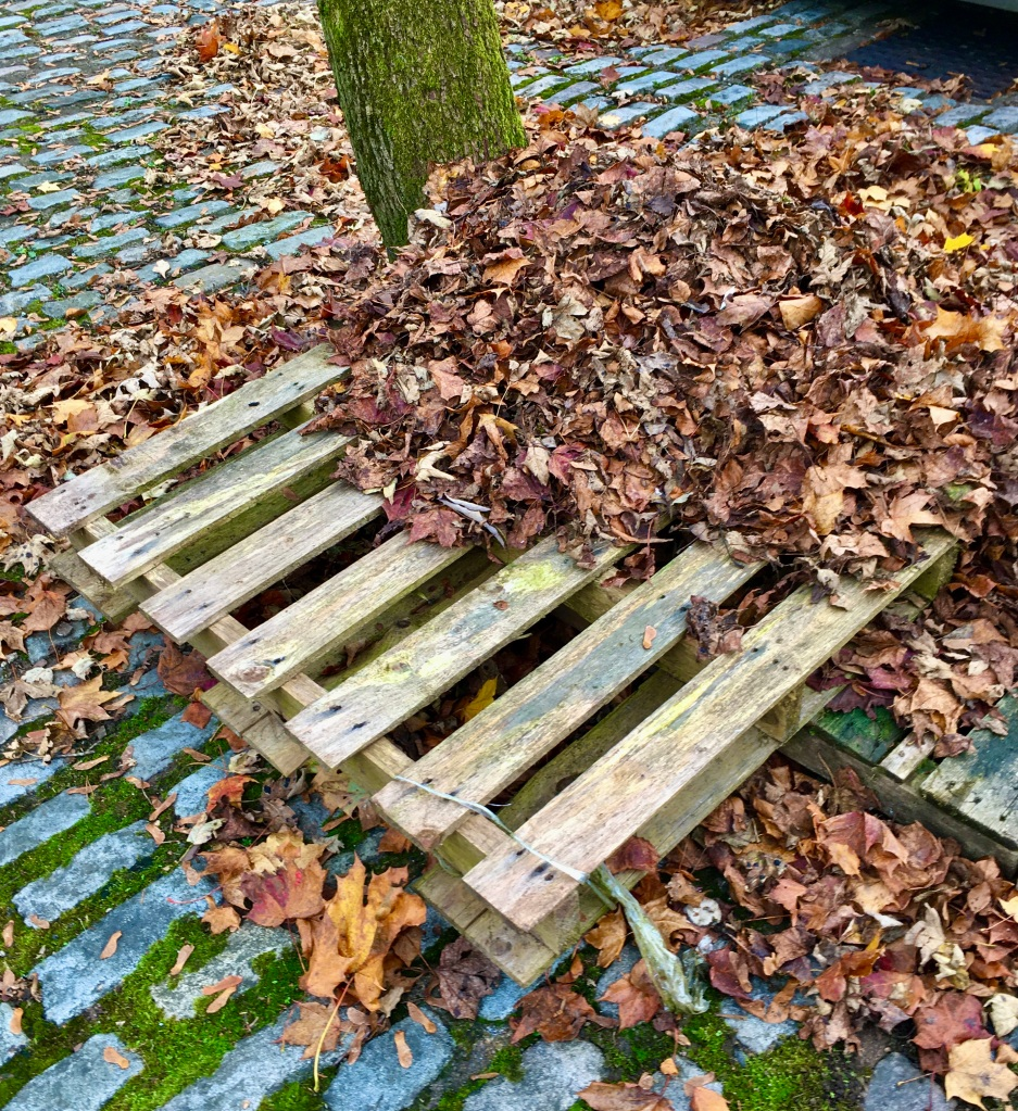 Leafs on a pallet by Jez Braithwaite