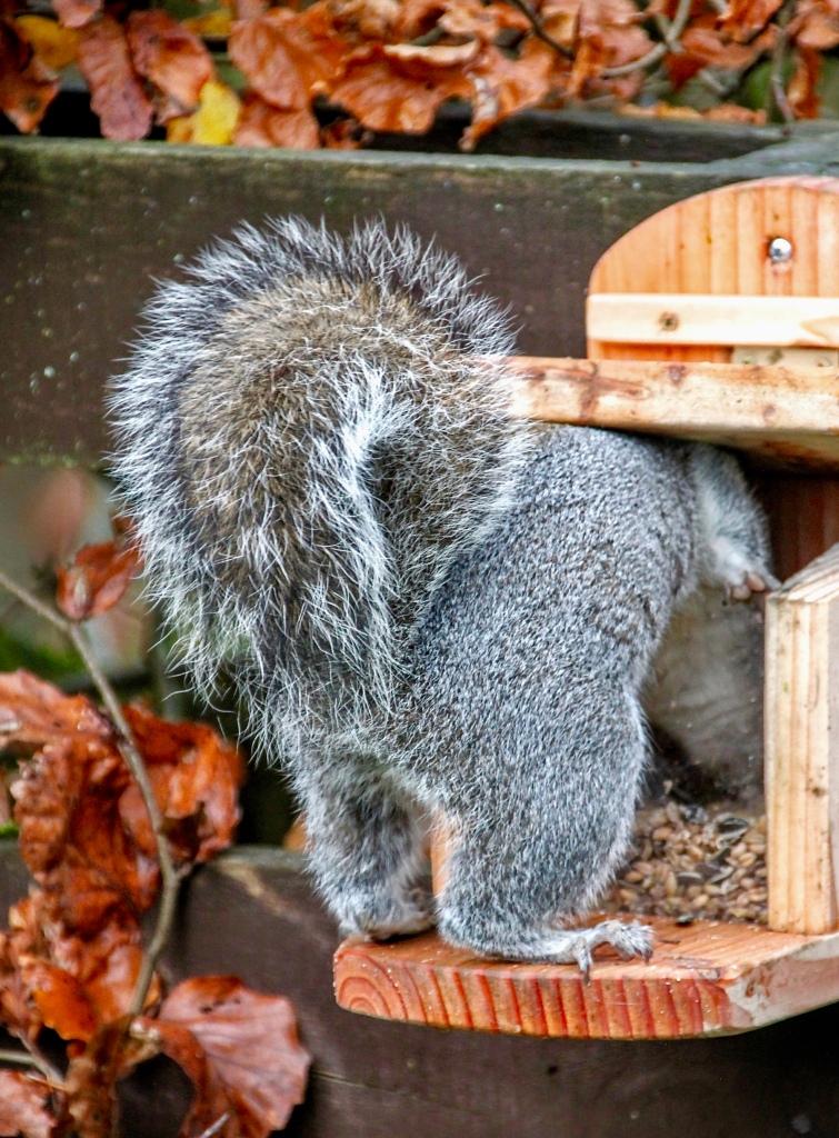 Squirrel Butt by Jez Braithwaite