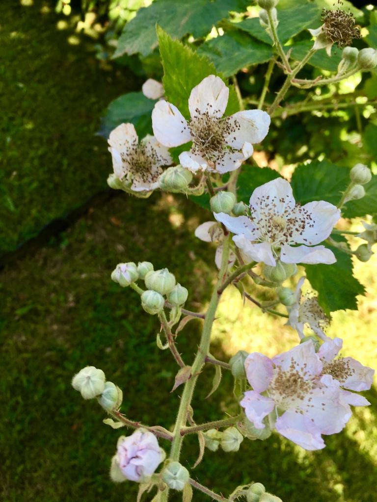 Brammle flowers