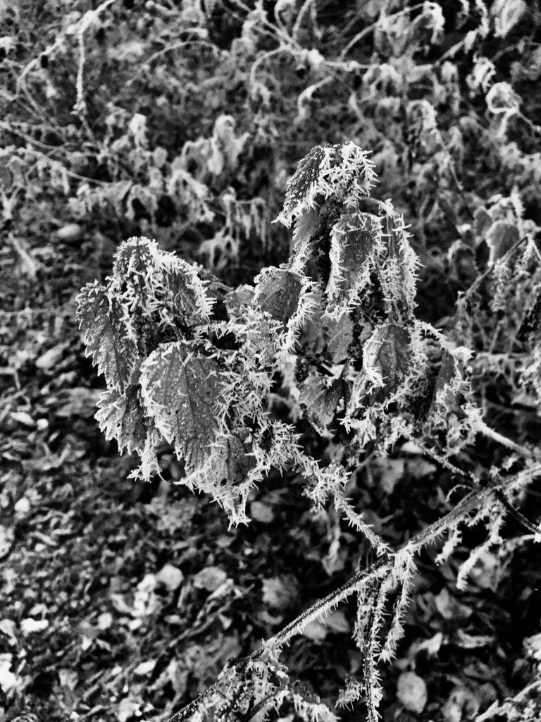 Rimie jaggie nettles in noir by Jez Braithwaite
