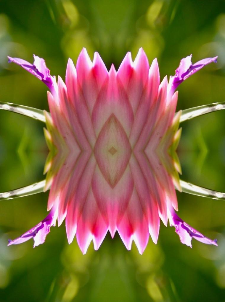 Bromelia - Quad symmetry