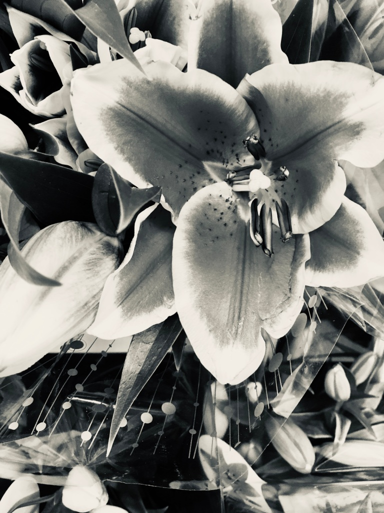 Lily in Silvertone by Jez Braithwaite