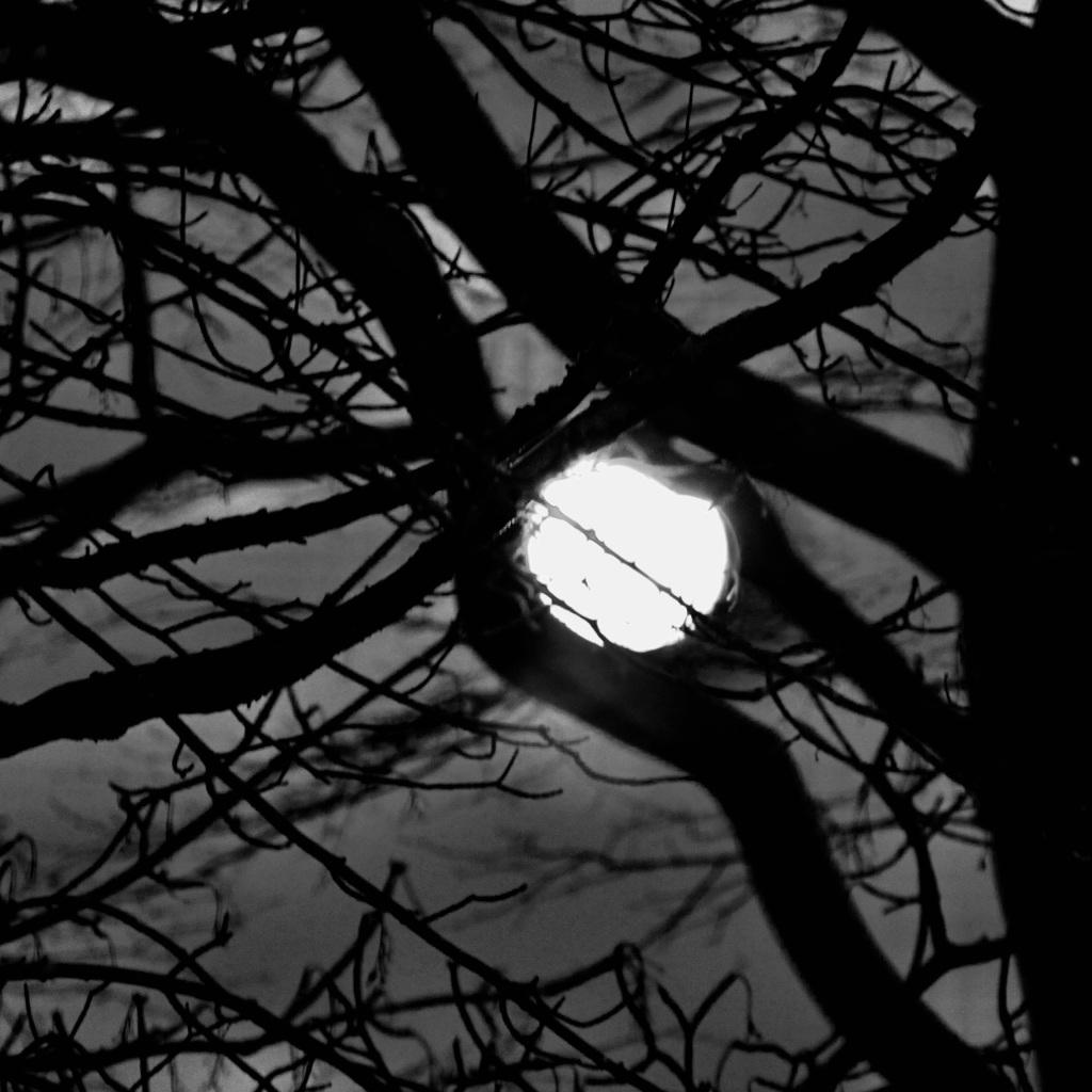 Holding the moonlight by Jez Braithwaite