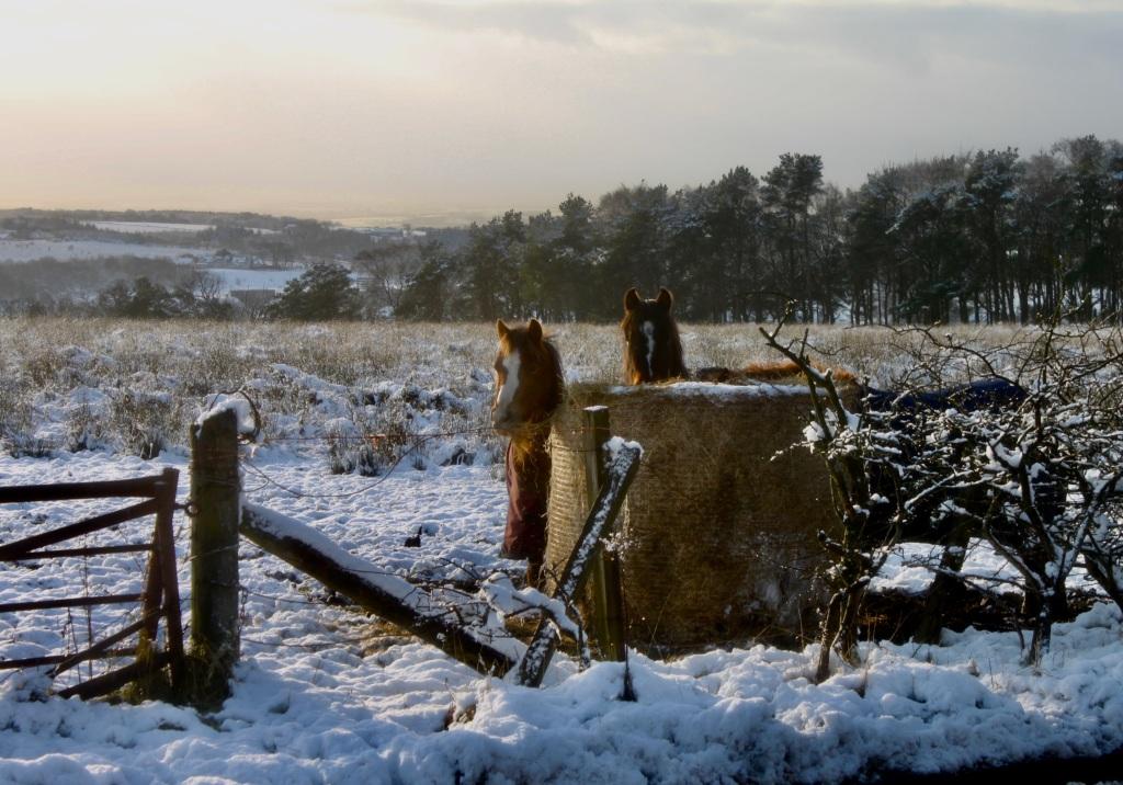 Hungry horses by Jez Braithwaite