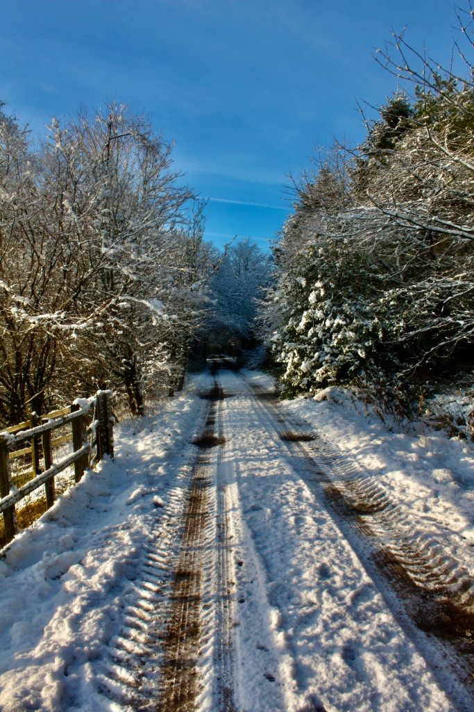 Snowy track #1