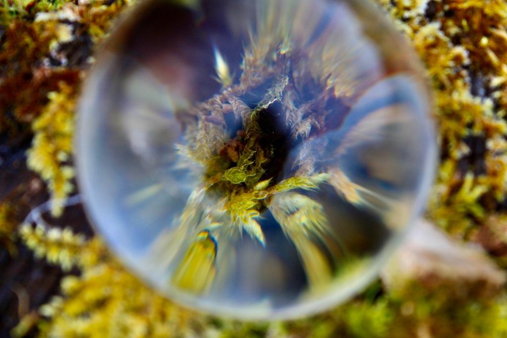 Moss through a lensball