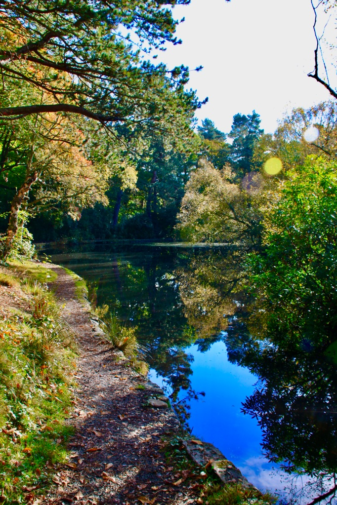 Pond in Pollock Country Park
