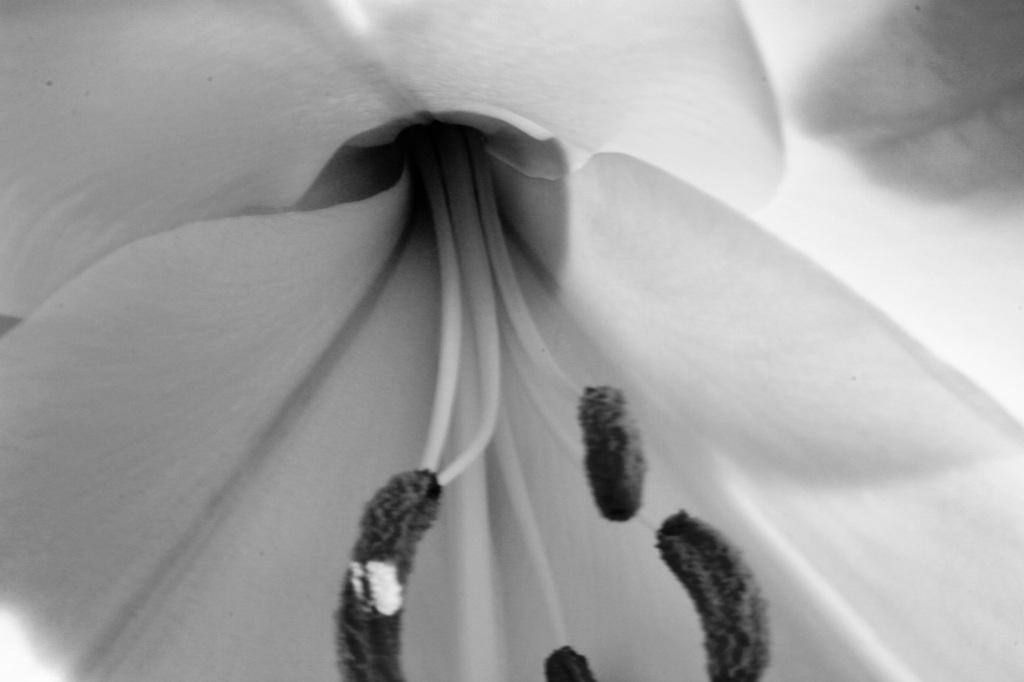 Lily interior