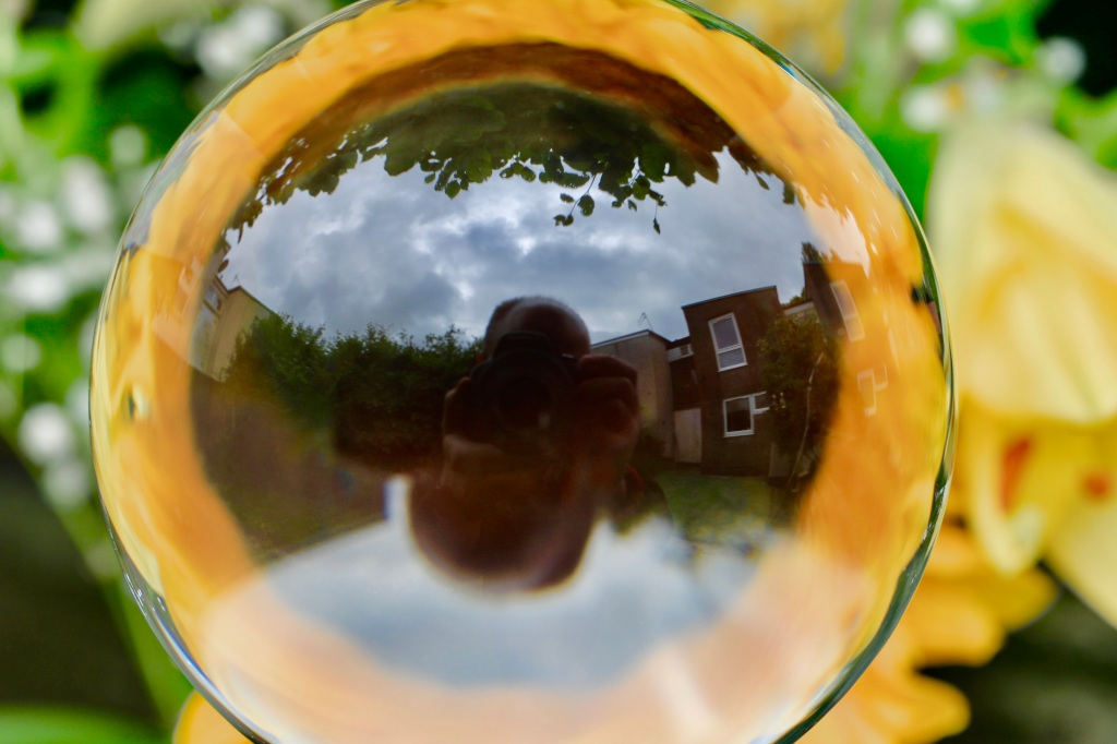 Reflections in a sunflower