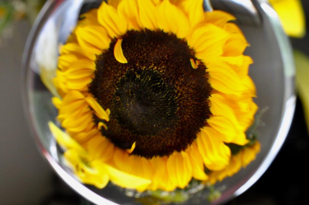 Lensball sunflower