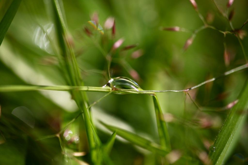 Raindrop on grass stem
