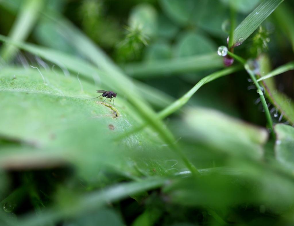 Tiny fly on a leaf